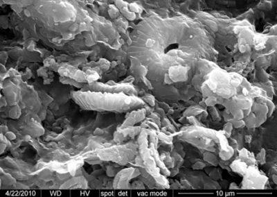 Cocolitos (tipo placolito) de cocolitofóridos en matriz micrítica