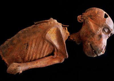 Momia de un mono, probablemente de la dinastía XVIII, hallada entre la tumba de Djehuty y la de Hery