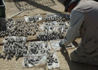 José Miguel reúne los shabtis que le han ido saliendo en los últimos días.