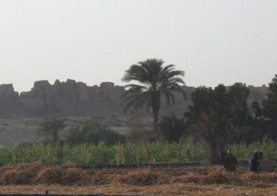 Faena agrícola junto al templo de Medinet Habu.