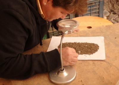 Leonor busca semillas y restos vegetales en la tierra de uno de los cuadrados.