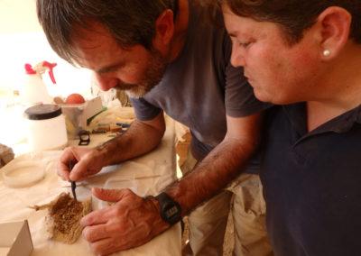 Leonor y Guillem recogen los restos vegetales que envolvían el shabti.