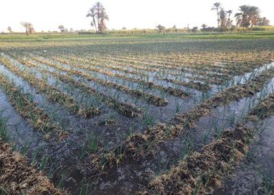 Campos de cultivo junto al Marsam.