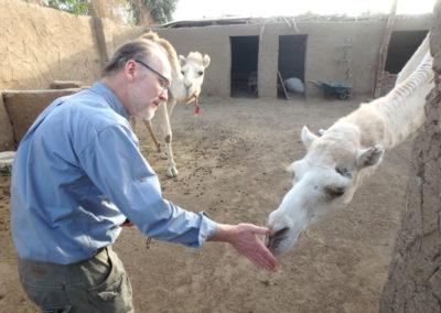 Neal visita a los camellos de Klaus junto al hotel Marsam.